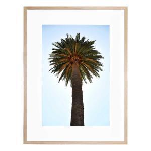 Big Palm Tree - Framed Print
