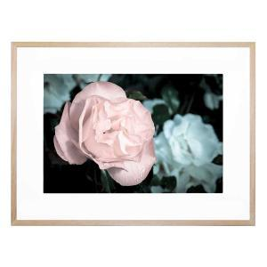 Ceremonious - Framed Print
