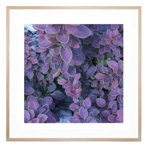 Barberry - Framed Print