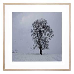 Arvid 1 - Framed Print