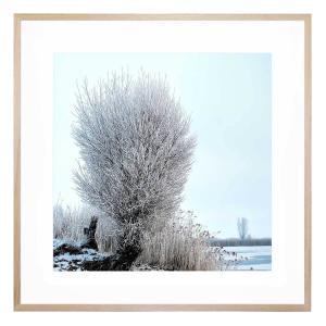 Arvid 2 - Framed Print