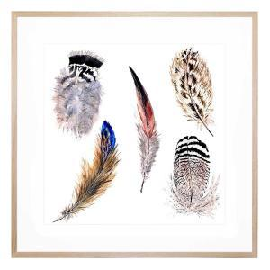 Cinque Feather - Framed Print