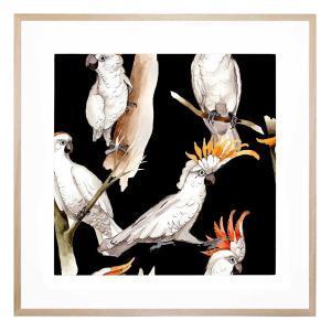 Cockatoo Cool - Framed Print