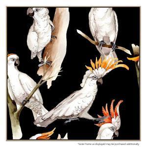Cockatoo Cool - Canvas Print