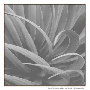 Aloe Curl - Canvas Print