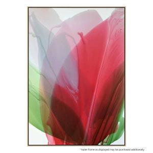 Red Amaryllis - Canvas Print