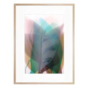 Impatiens -Framed Print
