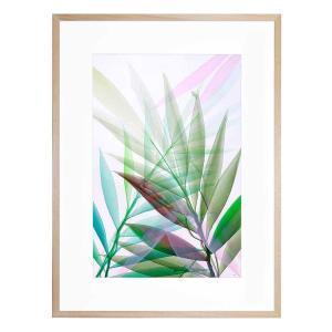 Tropical Study No 8 - Framed Print