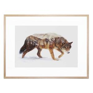 Arctic Wolf - Framed Print