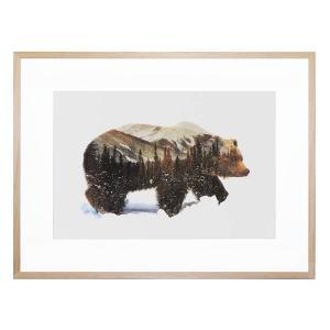 Arctic Grizzly - Framed Print
