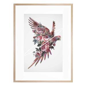 Fly Away - Framed Print