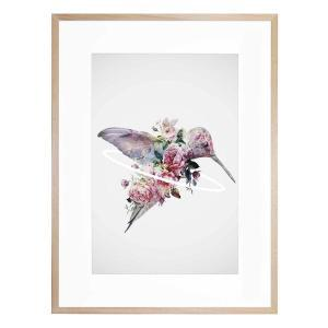 Kolibri - Framed Print