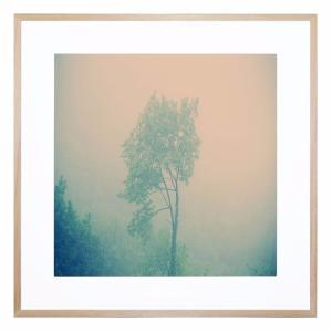 Lone Fir - Framed Print