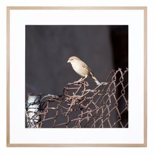 The Bird Watch - Framed Print