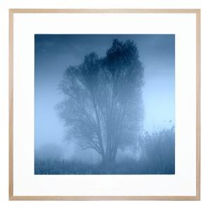 Lulu And Blue - Framed Print