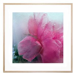A Petal In Time - Framed Print