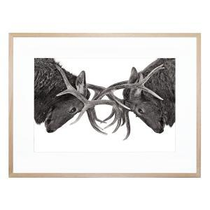Eye To Eye - Framed Print