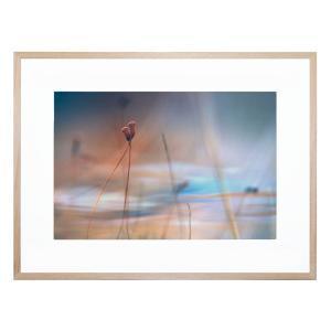 April Love - Framed Print