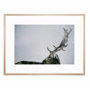 Doubled  Antler - Framed Print